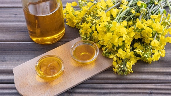 Holar - Blog - What are the uses for different edible oils when cooking - Canola Oil
